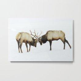 Elk arguments Metal Print