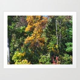 Fall Foliage 002 Art Print