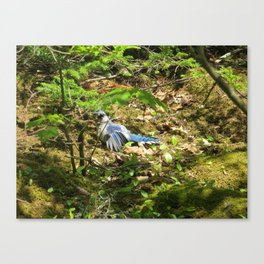 BLUEJAY SUNBATHING, SURROUNDED BY GREENERY Canvas Print