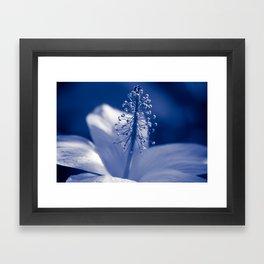 Enchanting Moments - Pua Aloalo - Koki'o Ke'oke'o - Hibiscus Arnottianus - Hawaiian White Hibiscus Framed Art Print