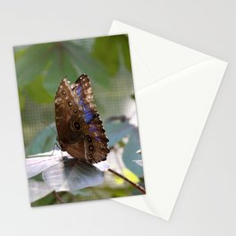 Butterfly Blue Stationery Cards