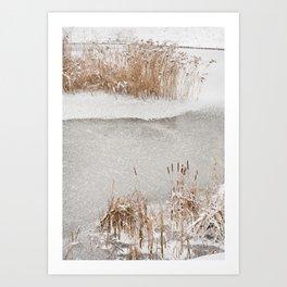 Typha reeds winter season Art Print