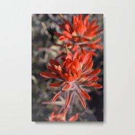 Desert Paintbrush Metal Print