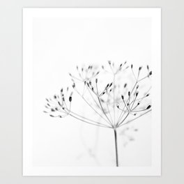 Dill Sprouts / Nature Photography Art Print