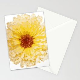 Beautiful Yellow Marigold Vector Isolated Stationery Cards