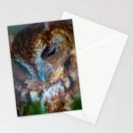 Eastern Red Phased Screech Owl Stationery Cards