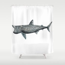 Basking shark (Cetorhinus maximus) Shower Curtain