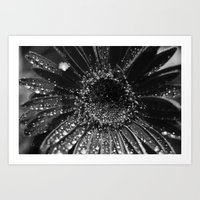 Tiny Worlds: Daisy in Black and White Art Print