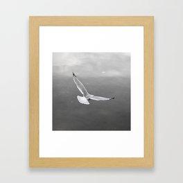 Flying Bird Framed Art Print