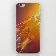 Sun Kissed Dahlia iPhone & iPod Skin