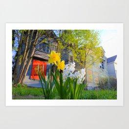 Daffodils and Dilapidation Art Print