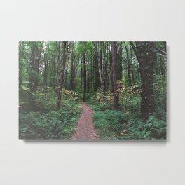 Forest Trail XLVI Metal Print