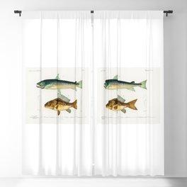 Salmon & Carpe by Charles Dessalines D' Orbigny Blackout Curtain