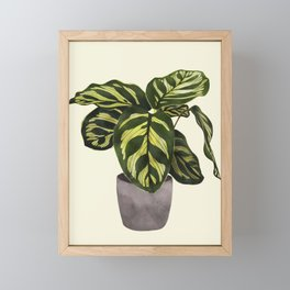 calathea botanical interior plant Framed Mini Art Print