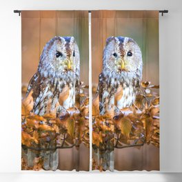 Little Owl Blackout Curtain