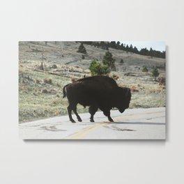Bison II Metal Print