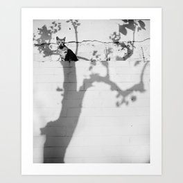 Cat in the shadow tree Art Print