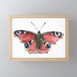 Peacock Butterfly Framed Mini Art Print