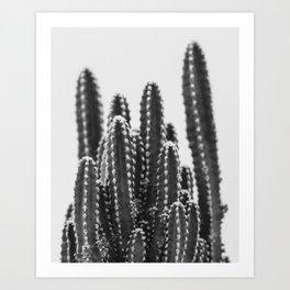 Desert Cactus / Arizona Art Art Print