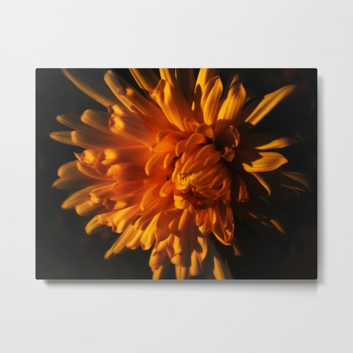 Autumn Flower Metal Print