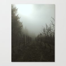 Foggy Morning Vineyard Canvas Print