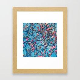 Spectacular Pink Grace: Oriental Magnolia Framed Art Print
