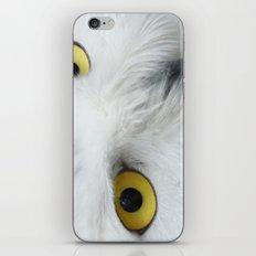 Snowy Owl Eyes iPhone & iPod Skin
