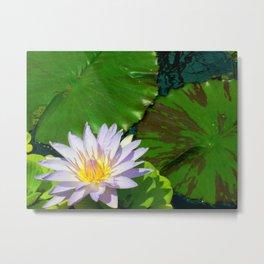 Nymphaeaceae Metal Print