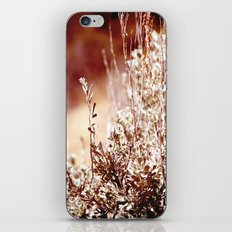 Beguiling iPhone & iPod Skin