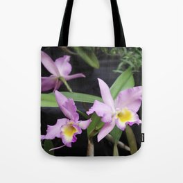 Cattleya Horace Maxima Orchid Tote Bag