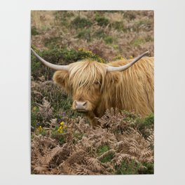 Highland Lad Poster