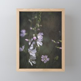 Rose Checkermallow and a Beetle Framed Mini Art Print