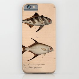 Vintage Print - Atlas of a Journey in North Africa (1828) - Black-Banded Trevally iPhone Case