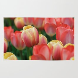 Colorful Yellow and Red Tulips in Spring Rug