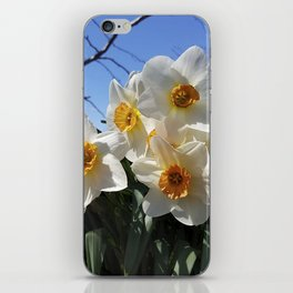 Sunny Faces of Spring - Gold and White Narcissus Flowers iPhone Skin