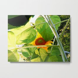 Partly Sunny Metal Print