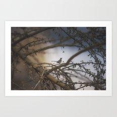 sparrow in the bramble Art Print