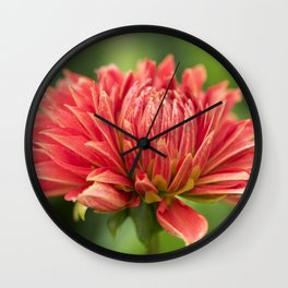 Parkland Glory Dahlia Wall Clock