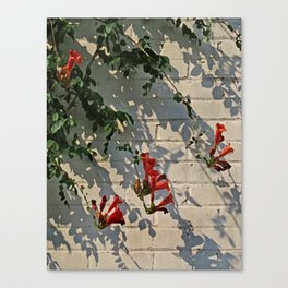 Red Summer Trumpets 2 Canvas Print