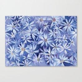 Shasta Daisies Canvas Print