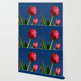 Red Tulips In The Blue Sky Wallpaper