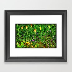 Red Hot Pokers Framed Art Print