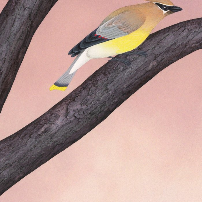 cedar waxwings on the stained glass tree Leggings