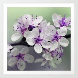 Modern blossom white violet green ombre floral Art Print