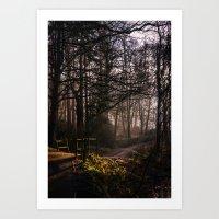 Fairytale Woods of North Yorkshire Art Print