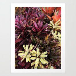 Hawaii Flowers Art Print