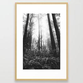 Trees // Fog // BW Framed Art Print