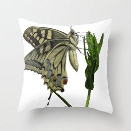 Scarce Swallowtail Throw Pillow