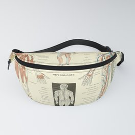 Vintage Encyclopedia Print - Larousse 1922 - Anatomy and Physiology Diagram Fanny Pack