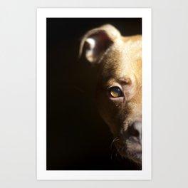 Pennie the Pittie Art Print